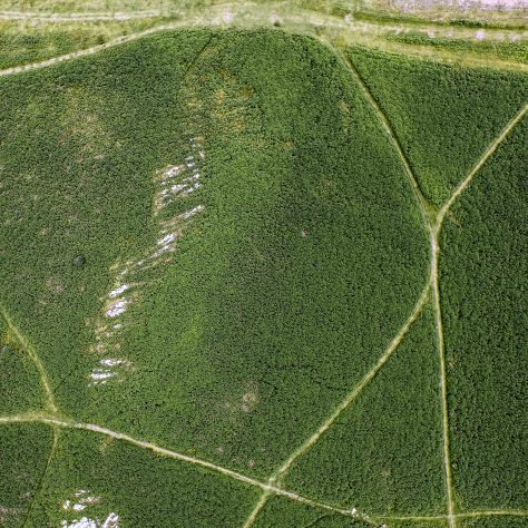 An aerial view  of the enclosure on Birkrigg Common, near Urswick, Ulverston, before bracken clearing.