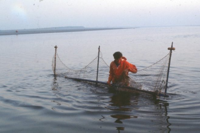 Fisherman Tom Smith standing in the water behind a haaf net | Alan Smith