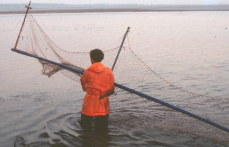 Fisherman Tom Smith placing the haaf net in the water