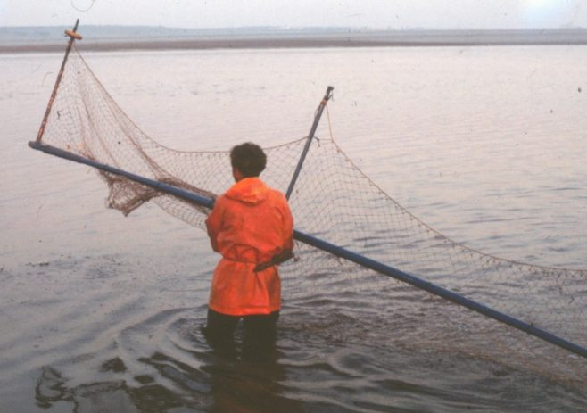Fisherman Tom Smith placing the haaf net in the water | Alan Smith