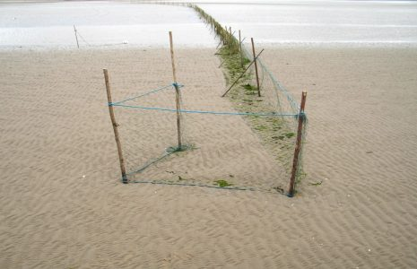 Baulk net on Morecambe Bay