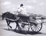 Bill Butler and horse and cart c1960