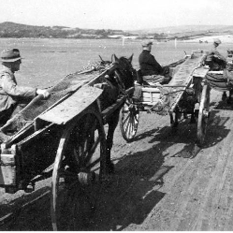 Horses and carts returning to Sandgate shore, Flookburgh c1950