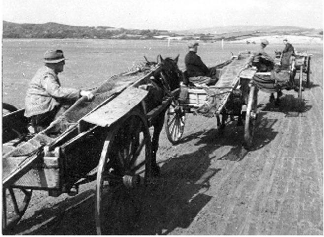 Horses and carts returning to Sandgate shore, Flookburgh c1950