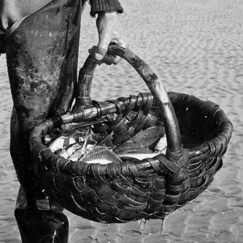 Man carrying a cockle basket containing flukes c1951