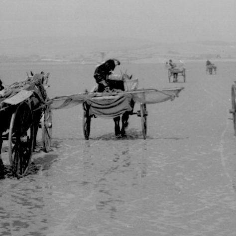 Shrimpers returning to Sandgate shore, Flookburgh, c1952