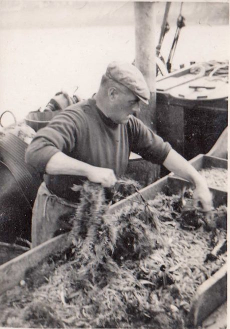 John Baxter aboard his fishing boat, LR 22, named Connie Baxter,sorting through a catch during a fishing trip in Morecambe Bay. | Baxter Family