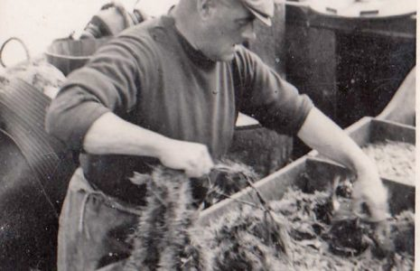 John Baxter aboard his fishing boat, LR 22, named Connie Baxter,sorting through a catch during a fishing trip in Morecambe Bay.