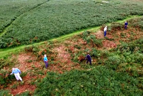 Bracken clearance at Birkrigg Common (aerial films)