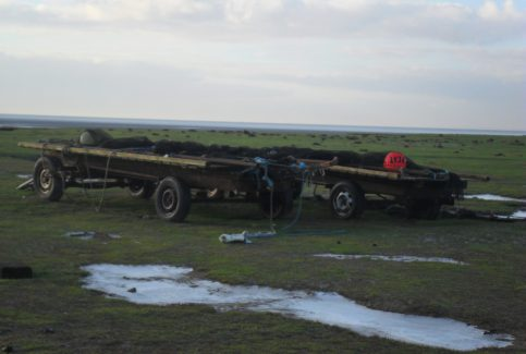 Photo of two trailers loaded with fishing nets at Flookburgh Bay, with sea in the background.