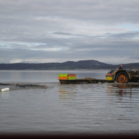 A tractor setting off into a channel dragging 2 shrimp nets