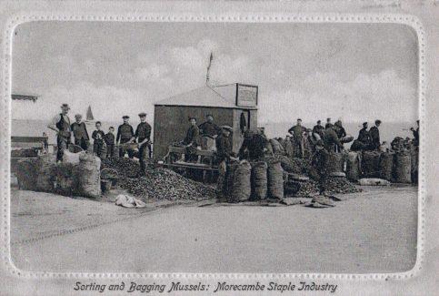 Morecambe fishermen sorting and bagging mussels