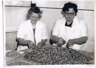 Picking shrimps at Morecambe Fishermen's Co-operative Society. Pictured are Ada Bartholemew, aunt of Eric Morecambe, and Ginny Gardener | Keith Willacy collection