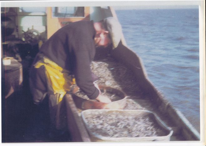 Amos Willacy riddling shrimps aboard