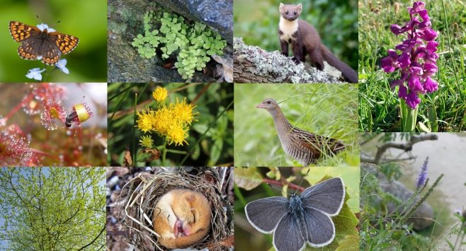 photo montage of all the Back on our Map species